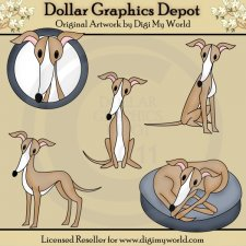 Blitz - Italian Greyhound
