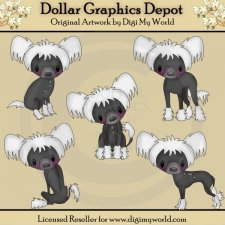 Lulu - Chinese Crested