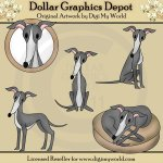 Dash - Italian Greyhound